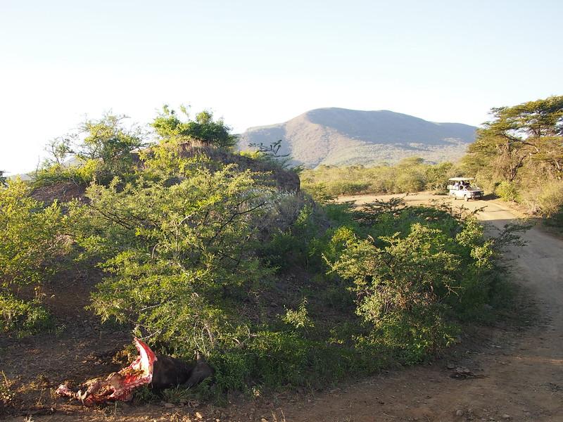 P5056347-buffalo-carcass.JPG