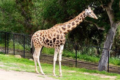 Santa Barbara Zoo Apr 2010
