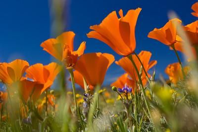 2015 Wildflowers