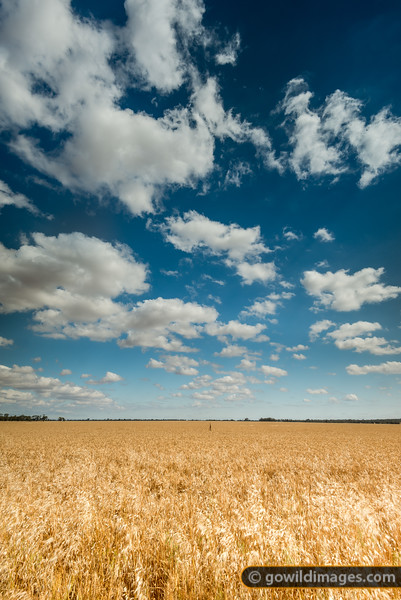 Across The Grain
