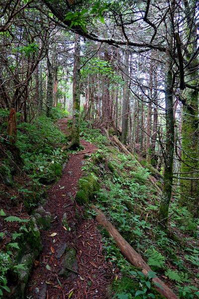 Mountains-to-Sea Trail - 6,100'