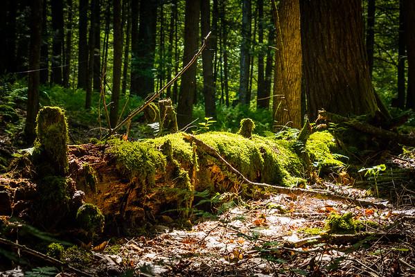 Woods & Trails