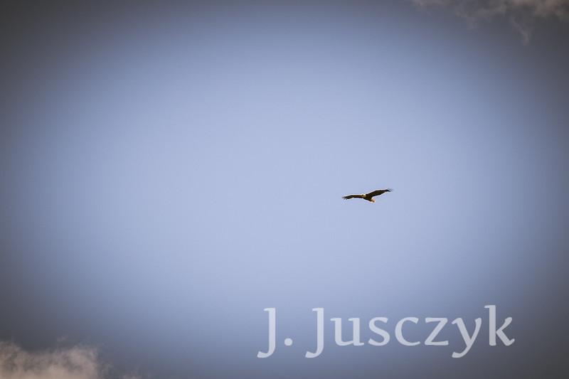 Jusczyk2021-6826.jpg