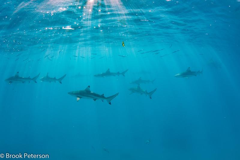 Sharks Under the Sun