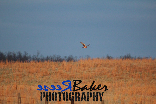2013 White Tail Hawks