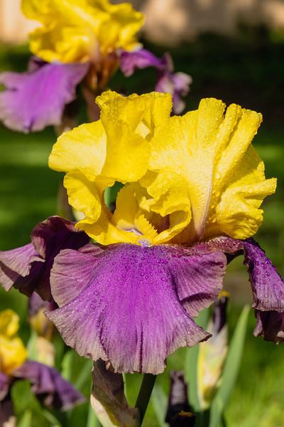 Flowers 5-5 10.jpg