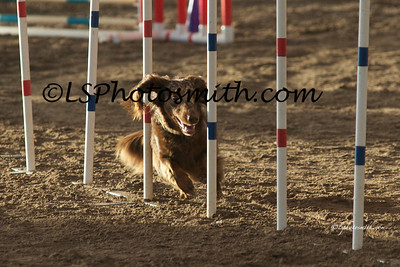 TLC AKC AUG 2012 Ex Jumpers Friday