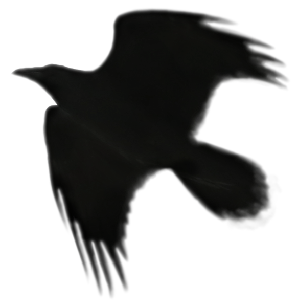 Raven 4.png