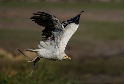 Birds of Prey Beekse Bergen 2018