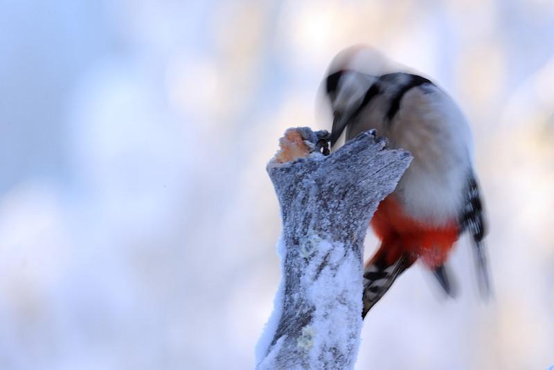 GS Woodpecker