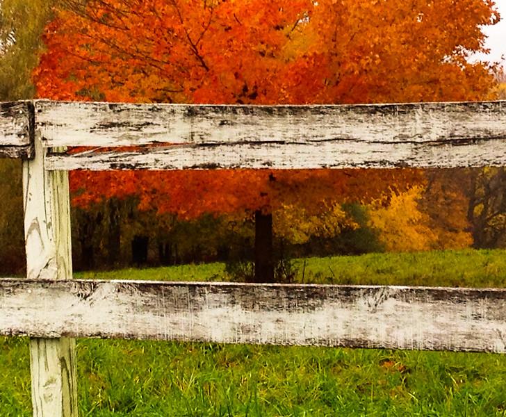 Fall Fence and Tree.jpg