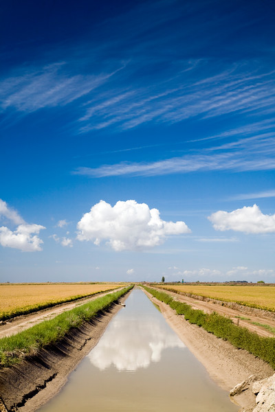 Canal de riego en los arrozales de Isla Mayor (Sevilla), en el entorno de Doñana.