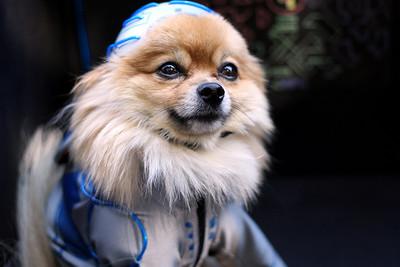 Dog Parade 2010