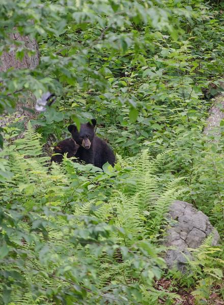 Black Bear in Yard-2-2-5.jpg