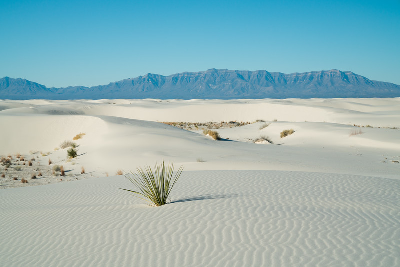 White Sands NP 2020-10.jpg