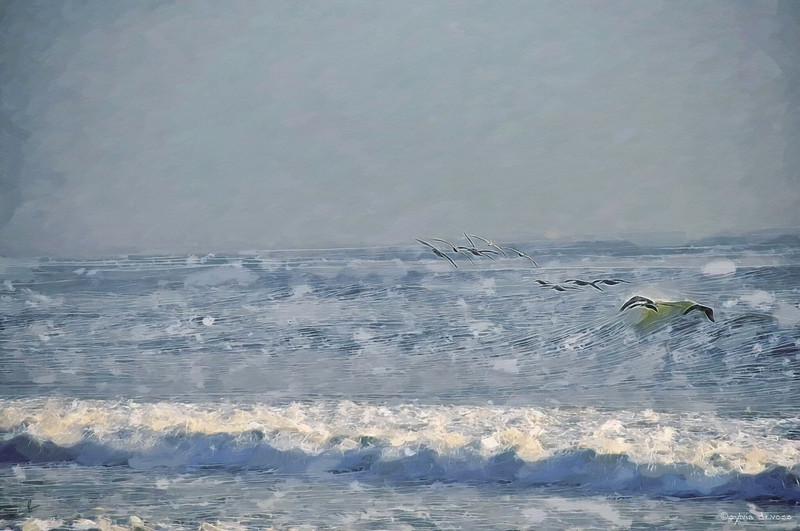 obxpelicanfishingSJDweb.jpg