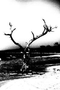 017-tree-nlg-03jul06-0705