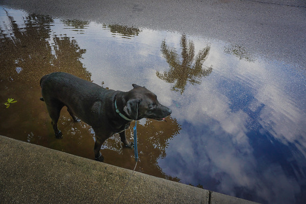 Rainy July, Dog Park, NPR Walks, 72715