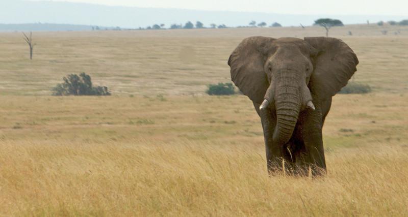 Kenya - 47.jpg