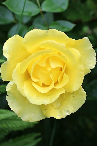 """Yellow in the Rain"" - Daily Photo - 08/19/13"
