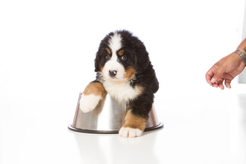 2013-Pearson Pups-Jun02-0369.jpg