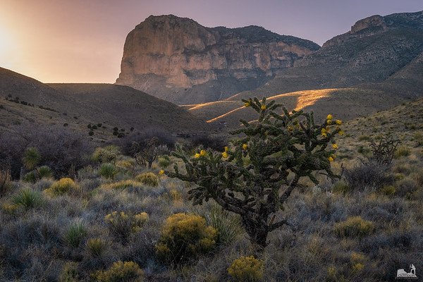 Guadalupe Mountains NP