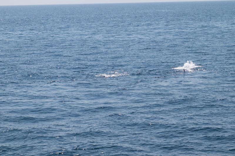 humpbacks-6262.jpg