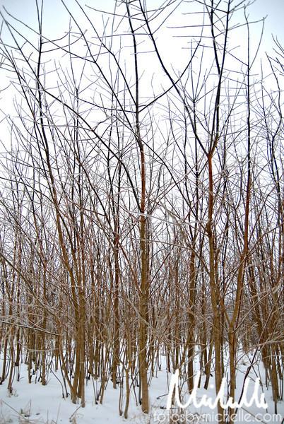 Snow1-29-10-014.jpg