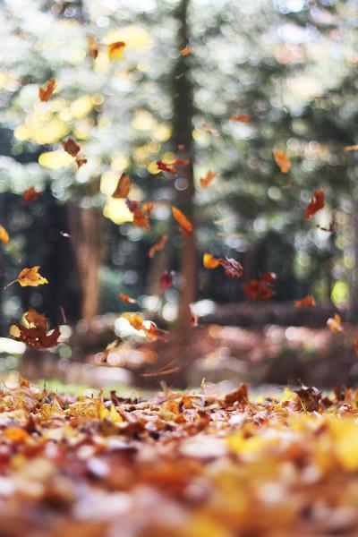 spd9csowcky-autumn-mott.jpg