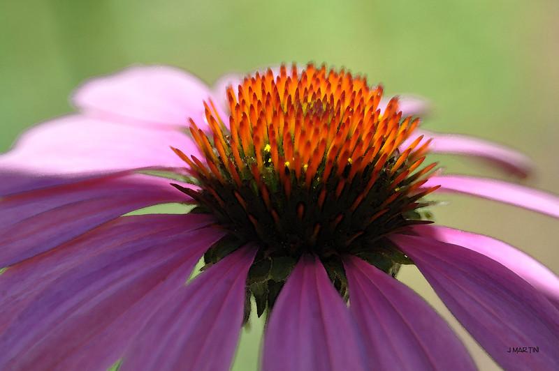 flower top 7-26-2009.jpg