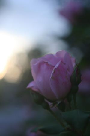 Best of: FLOWERS