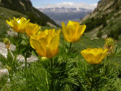 Pyrenees I