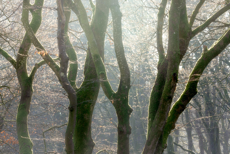 Rold Skov Forest morning light Denmark woodland landscape photography 4.jpg