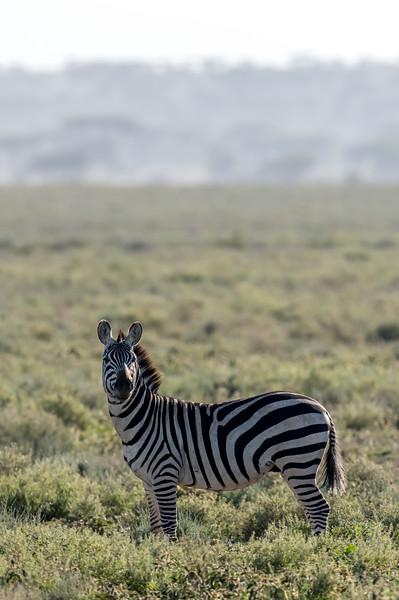 Tanzania_Feb_2018-478.jpg