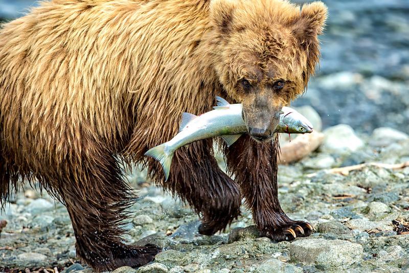 Alaska_2013_FH0T7820.jpg