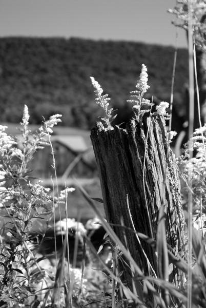 Fencepost and Barn.jpg