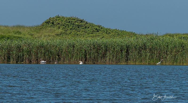 Block Island-16.jpg