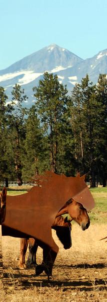 Local-Sisters_LazyZ-Sculpture_Horses3up_KateThomasKeown_DSC9744 copy.jpg