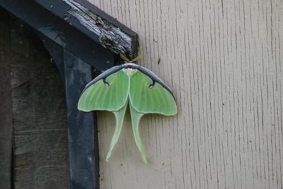 2017 Big Moth