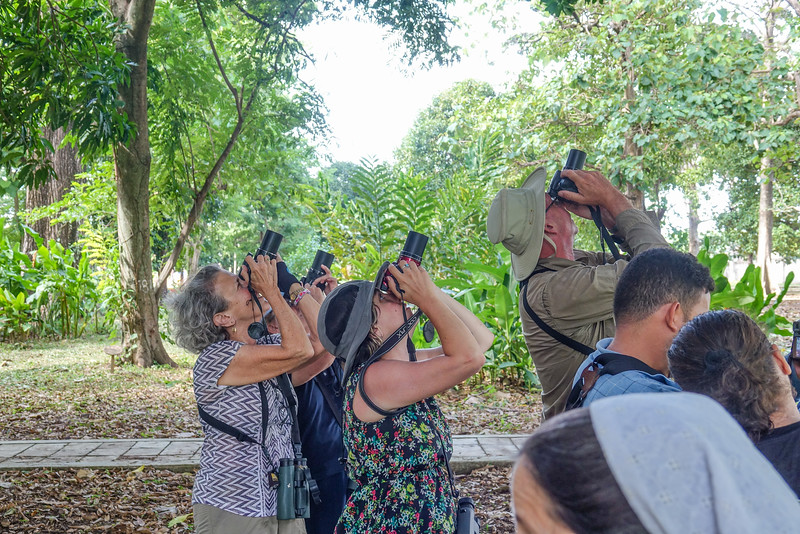 photographing the Black and White Owl, La Ceiba Honduras