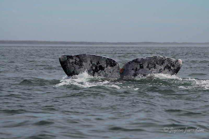 Mexico-Loreto-Whale-2415.jpg