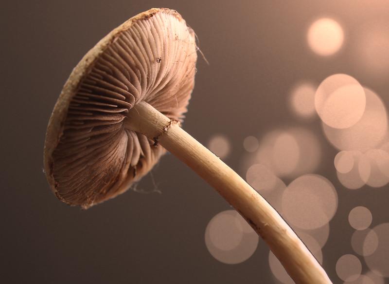 mushroom-flash.jpg