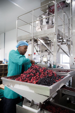Euroberry production
