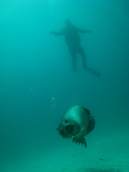 Diving in the Galapagos (115 of 392)