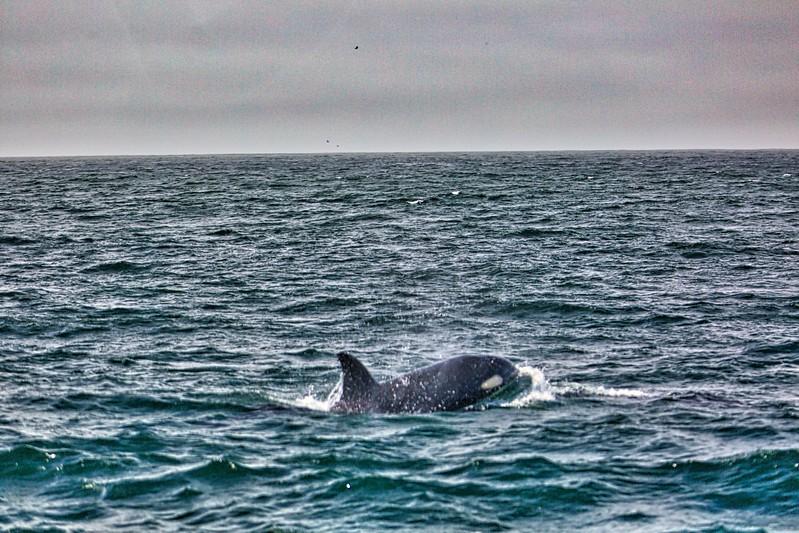 Whale watching off Monterey Coast2017-09-20 (17).jpg