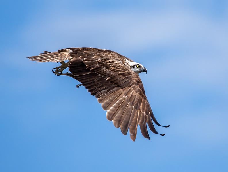 Raptors - Birds of Prey