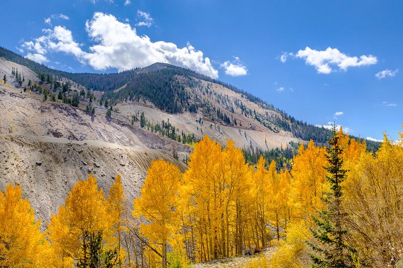 Aspens, Route 50, Colorado