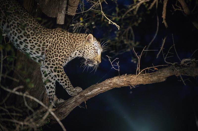 LeopardHills-20171022-1040.jpg