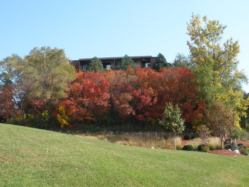 Burnsville Autumn Leaves
