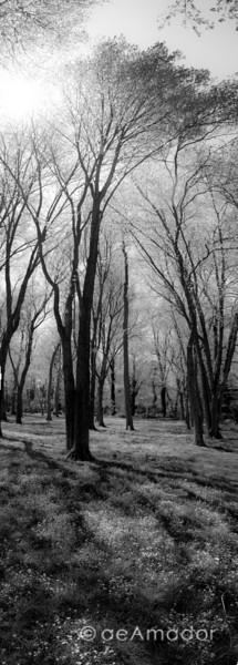 """Spring Light"" _DSC0246-Editaeamador©-MDSC"
